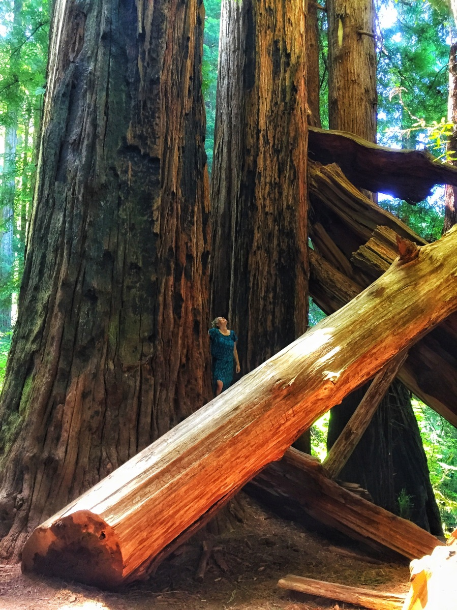 Road Tripping!! California Redwoods, Grants Pass and Portland, Oregon
